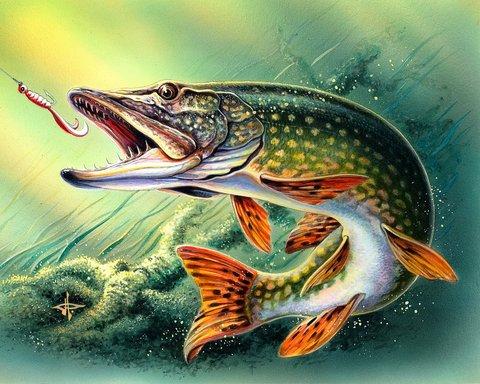 Свежие статьи про рыбалку