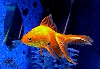 Скачать Бесплатно Аквариумные Рыбки - фото 4
