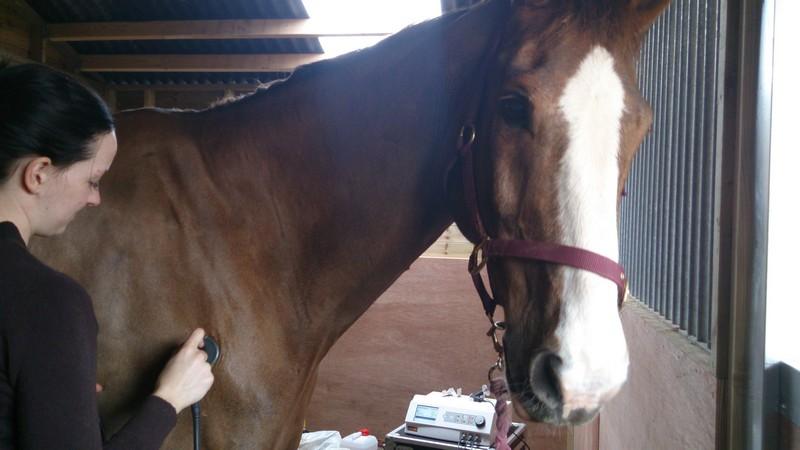 Indiba Activ для лошадей