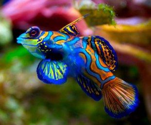 тонкости покупки рыбок