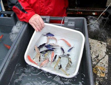 Качественная доставка аквариумных рыбок