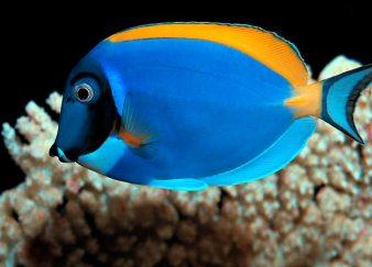 Оптовая покупка аквариумных рыбок
