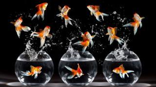 как выбрать магазин для покупки рыбок