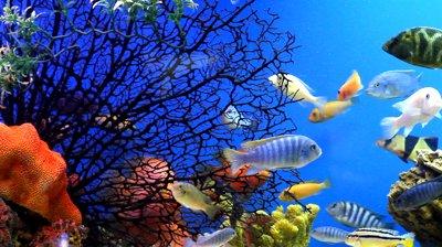 Покупка экзотических рыбок для аквариума