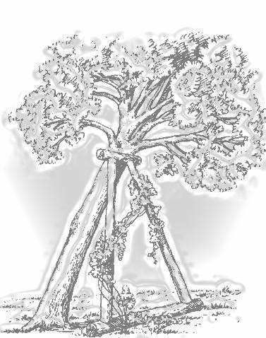 дерево с подпоркой  как  осанка ребенка на стуле школьника со спинкой