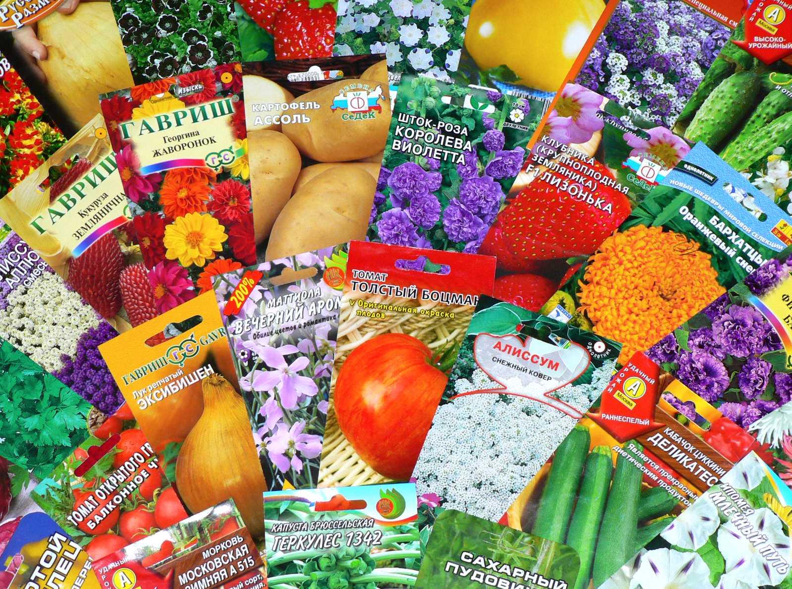Покупка семян в интернет-магазине «Семена Оптом» | Статьи от партнеров |  Понедельник. Все главные события и новости Тольятти
