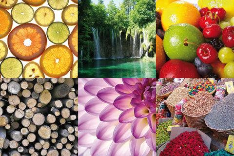 Группы ароматов: какие бывают и как распознать