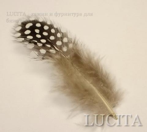 Перья декоративные (цвет - серый в белый горошек) 5-10 см , 3 гр ()