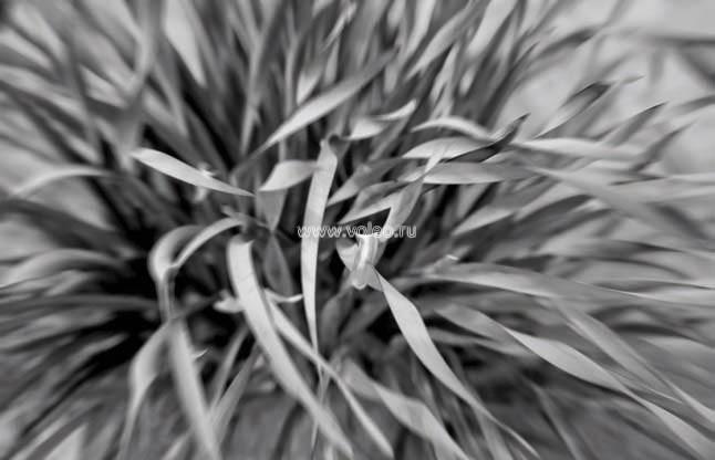 Фотообои (панно) Vallon Due 2012, интернет магазин Волео