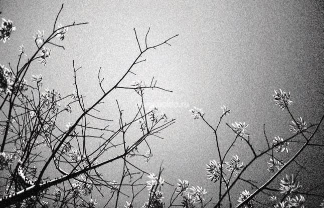Фотообои (панно) Vallon Due 2013, интернет магазин Волео