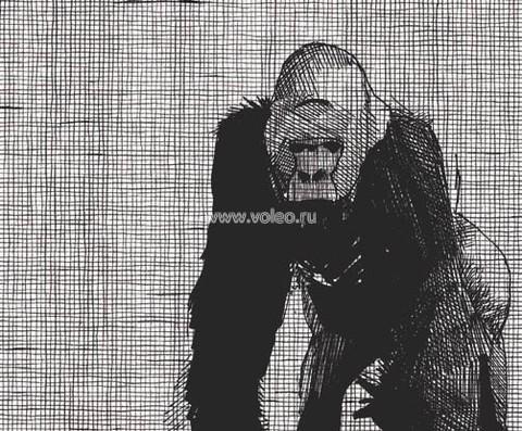 Фотообои (панно) Vallon Due 2033, интернет магазин Волео