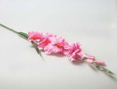 Гладиолус 558285 розовый