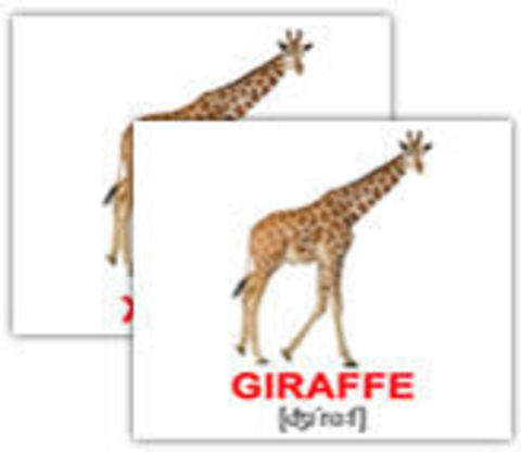 domesticity of giraffes and fox in