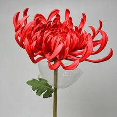 Хризантема красная А 101-2