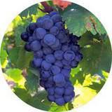 ХМЭЛЬ (вино), для красных вин