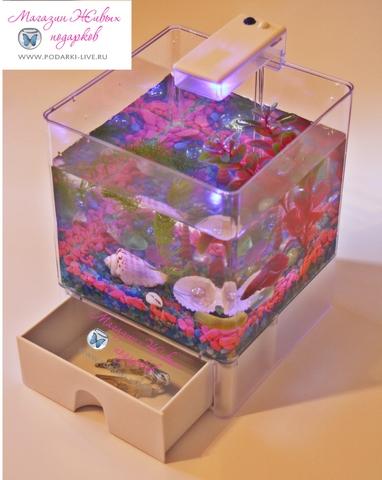 Мини аквариум куб 3 л с подсветкой №008