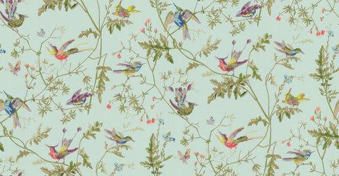 Обои Cole & Son Collection of Flowers 62/1004, интернет магазин Волео