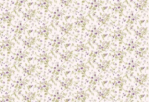 Обои Cole & Son Collection of Flowers 81/11047, интернет магазин Волео