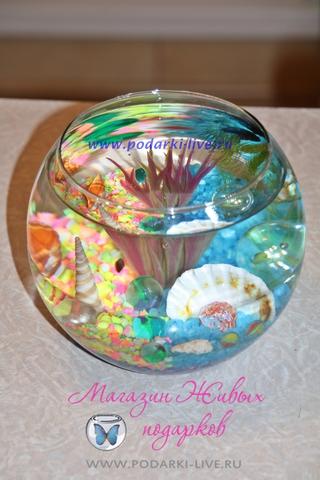 Мини аквариум шар 2 л