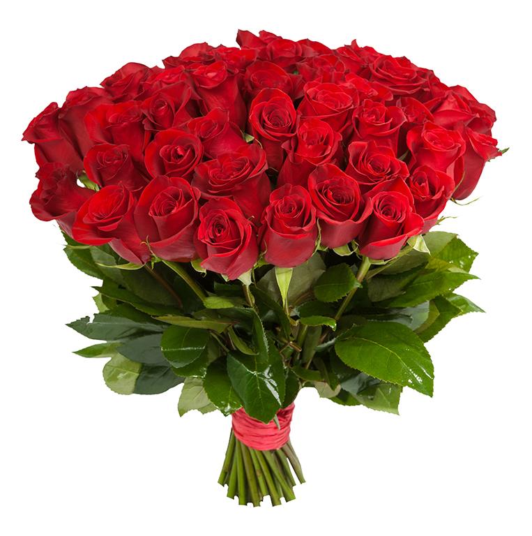 Картинки по запросу красные розы