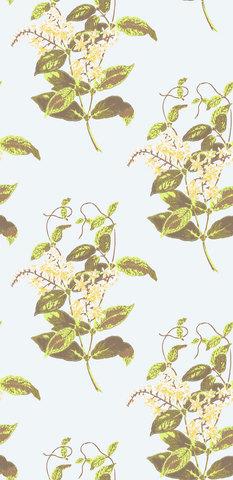 Обои Cole & Son Collection of Flowers 81/6023, интернет магазин Волео
