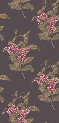 Обои Cole & Son Collection of Flowers 81/6024, интернет магазин Волео