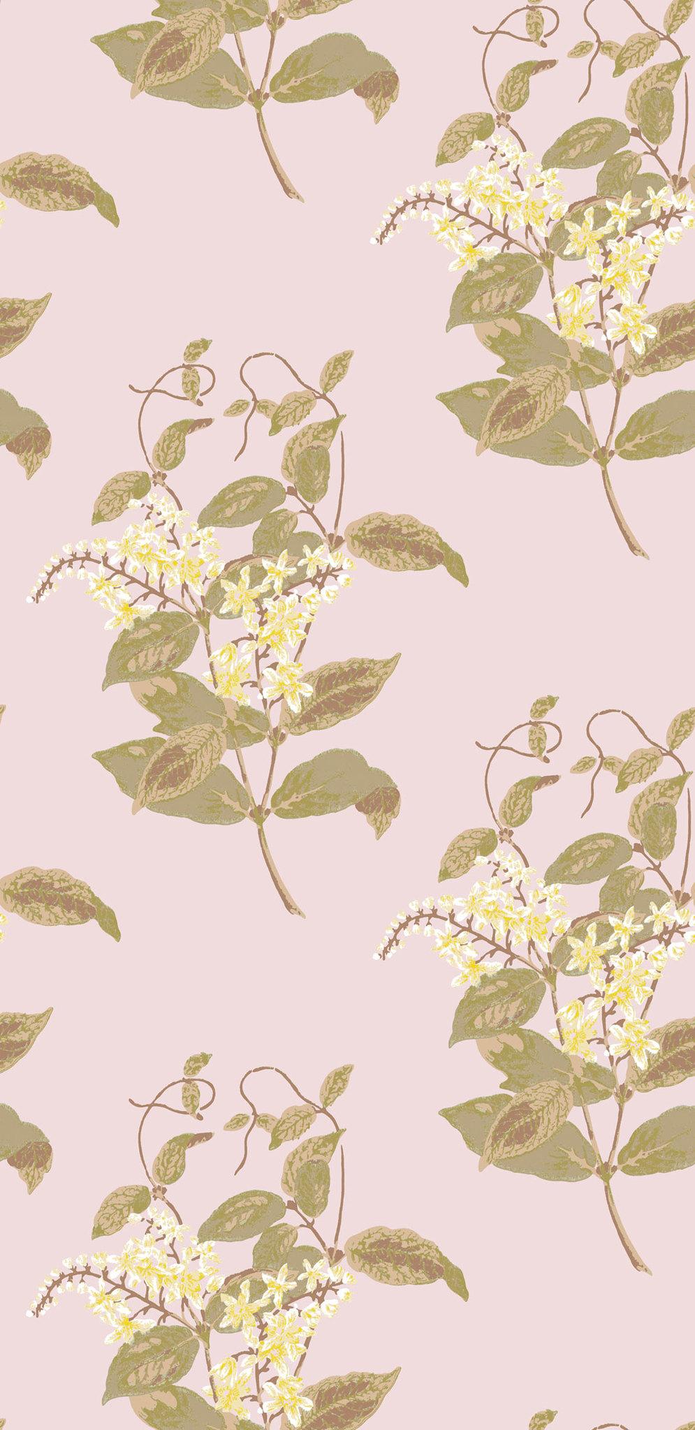 Обои Cole & Son Collection of Flowers 81/6025, интернет магазин Волео