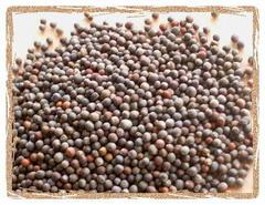 Брокколи семена BIO, 500г (Италия)