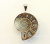 Подвеска Аммонит (цвет - античное серебро) 50х30х8 мм