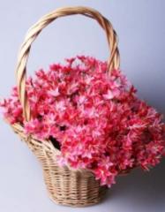 Букет цветов 6-277