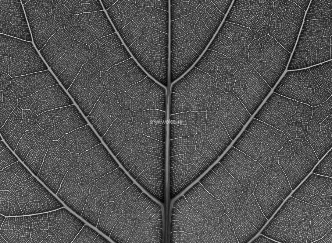 Фотообои (панно) Mr. Perswall Urban Nature P031502-8, интернет магазин Волео