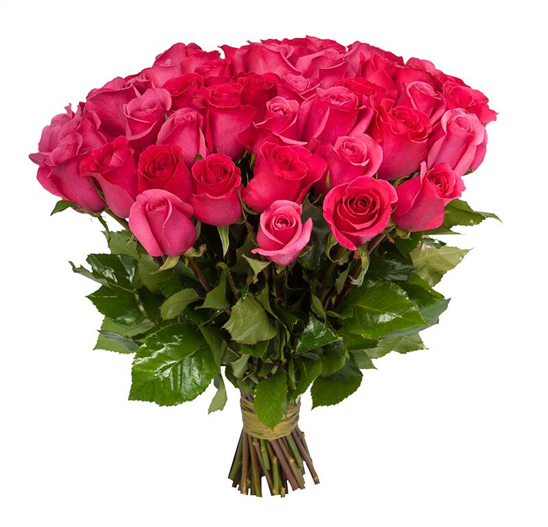 Купить пинк флойд розы
