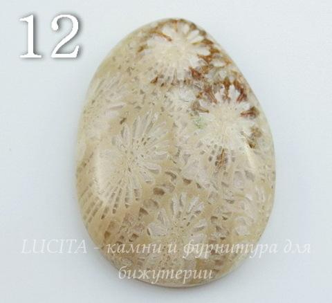 Кабошон Коралл (№12 (30х22 мм))