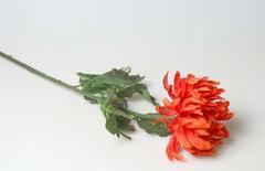 Хризантема  красная 470853