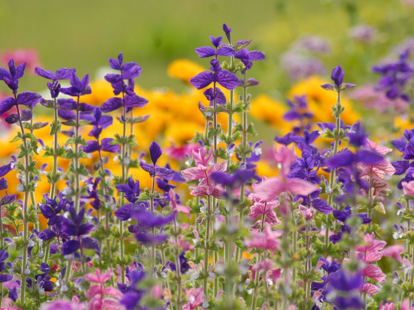 Отдушка Полевые цветы