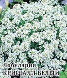 Лобулярия Кристалл Белый 250 шт.