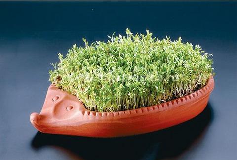 Проращиватель ёжик для семян микрозелени