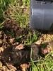 Большой набор кротоловок SuperCat Vole Trap из 12 шт (Swissinno)