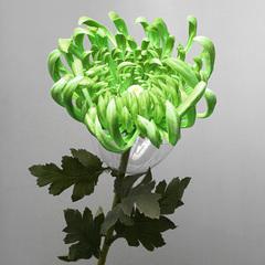 Хризантема зеленая , арт.  А 101-1