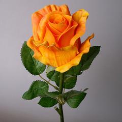 Роза 1080-2 оранжевая