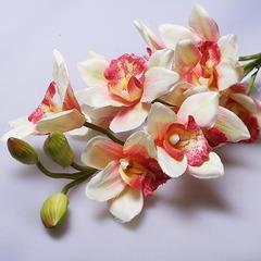 Орхидея 60027-51