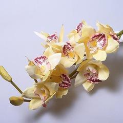 Орхидея 60027-04