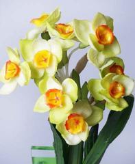 Нарциссы зеленые 6-231