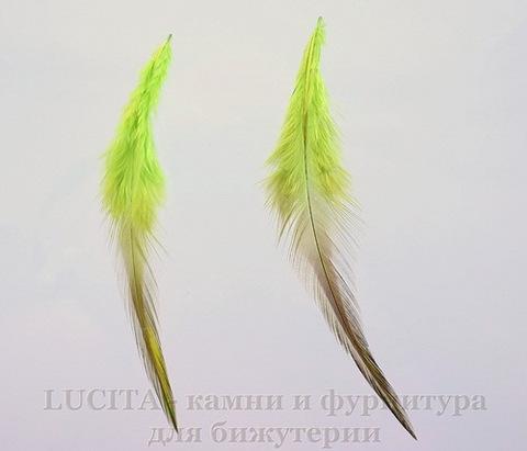 Перья декоративные (цвет - салатово-оливковый) 8-13 см, 5 гр
